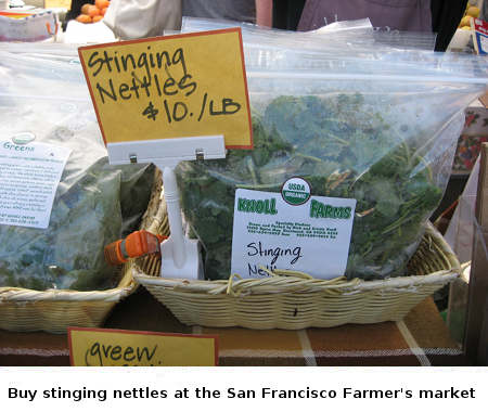 You can buy Stinging Nettle at the SF market or