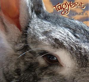 Shimmer CD Cover